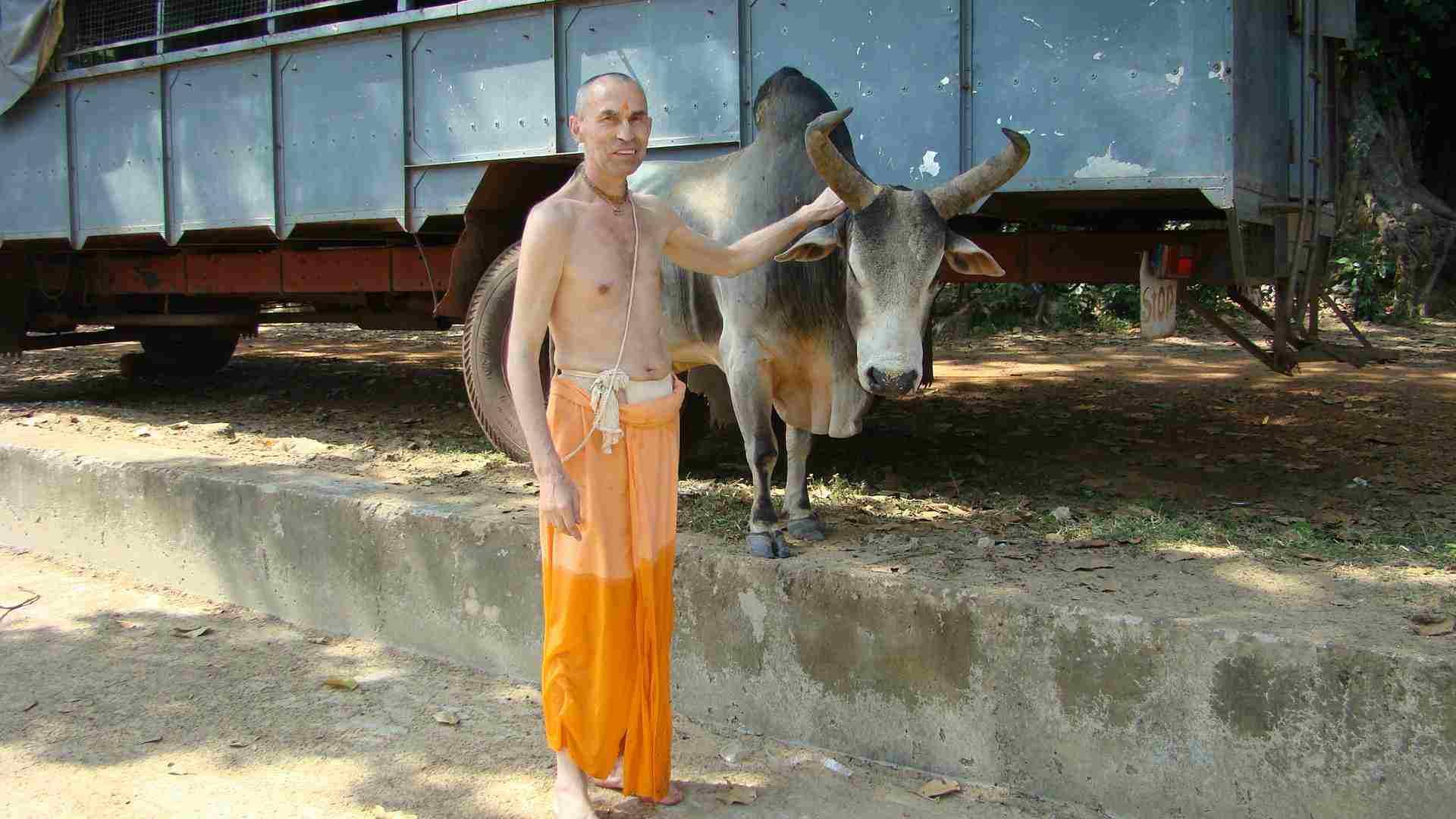 Порно фото совокупления коровы и быка 3 фотография